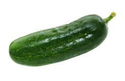 Single cucumber. Single fresh pickle cucumber isolated on white Stock Images