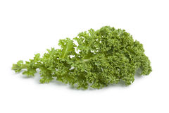 Single curly kale leaf. On white background Royalty Free Stock Images