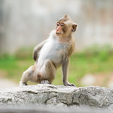 Single cute monkey Stock Photos