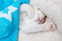 Fluffy kitten sleeping under a blanket Stock Photo