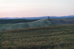 A single cypress tree in the middle of a field in Val d`Orcia or Valdorcia in Tuscany, a very popular destination. A single isolated cypress tree in the middle royalty free stock images