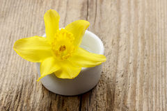 Single daffodil flower in white ceramic pot Stock Photography