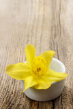 Single daffodil flower in white ceramic pot Stock Images