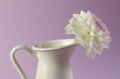 A single dahlia Royalty Free Stock Photos