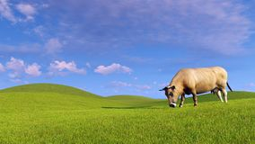 Single dairy cow graze on green hills. Single red dairy cow graze on a green pasture under blue cloudy sky at evening time. Realistic 3D illustration was done vector illustration