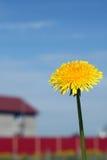 Single dandelion. On the sky background Royalty Free Stock Photo
