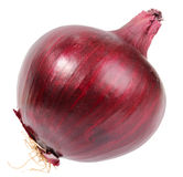 Single a dark-red fresh onion Royalty Free Stock Image