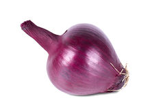 Single a dark-red fresh onion. Stock Images
