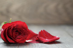 Single dark red rose on wood background Royalty Free Stock Images