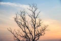 Single Dead dry branch tree on sunset stock photography