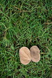 A single dead leaf lay on the green grass Royalty Free Stock Photography