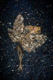 Single decay leave on dark asphalt. Single decay leave on dark wet asphalt after rain Stock Photography