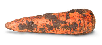 Single Dirty Carrot Royalty Free Stock Photo