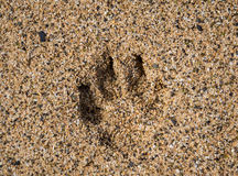 Single dog paw print in sand Royalty Free Stock Photography