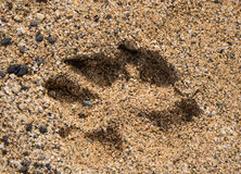 Single dog paw print in sand Royalty Free Stock Image