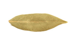 Single dried bay leaf isolated Stock Image