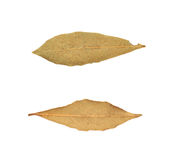 Single dried bay leaf isolated Stock Photos