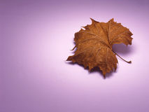 Single Dried Leaf Stock Photo