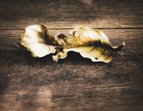 Single dried leaf on wooden floor nothing last forever concept idea of change philosophy background.  stock photos