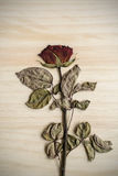 Single dried rose flower isolated on wood Stock Photo