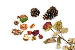 Single dried rose, flower and pine cone isolated on white Royalty Free Stock Images