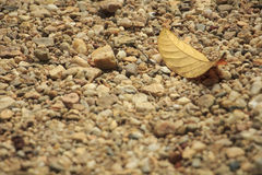 Single dry leaf. On dirt road Royalty Free Stock Photo