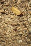 Single dry leaf. On dirt road Stock Photos