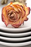 Single dry rose on a plate Stock Photos