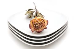 Single dry rose on a plate Royalty Free Stock Image