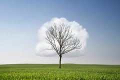 Environment conservation concept Royalty Free Stock Photo