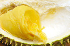 Single durian fruit Stock Image