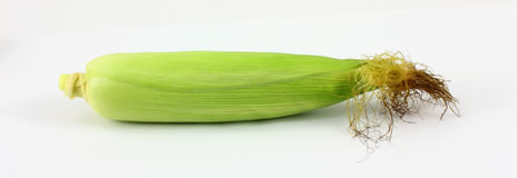 Single Ear Corn Stock Photos