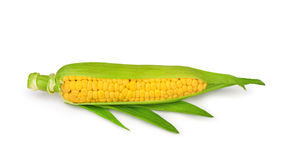 Single an ear of corn isolated. Stock Image