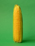 Single ear of corn Stock Photos