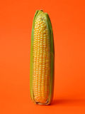 Single ear of corn Royalty Free Stock Photos
