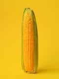 Single ear of corn Stock Photos