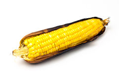 Single an ear of corn . Royalty Free Stock Photos