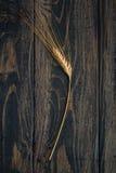 Single Ear of Wheat Royalty Free Stock Photos