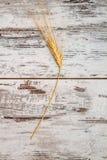 Single Ear of Wheat Royalty Free Stock Photography