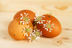 Single Easter egg ini the grass Stock Images