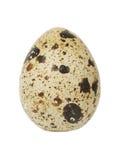 Single egg Stock Image