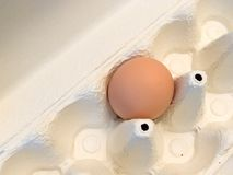Single egg Royalty Free Stock Images