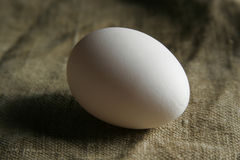 Single egg Stock Images