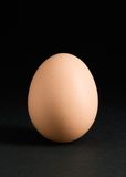 Single egg on black. A single egg isolated on a black background royalty free stock images