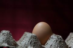 An egg in an egg carton. A single egg in a cardboard egg carton with a dark red and black background Stock Image