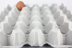 Single egg on tray Royalty Free Stock Photos