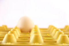 Single egg on yellow case Stock Image