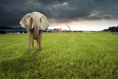 Single elephant on grassland with dawn Stock Photography