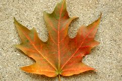 A single fall leaf in orange and green Royalty Free Stock Photo