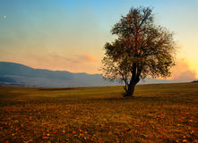 Single fall tree Stock Image